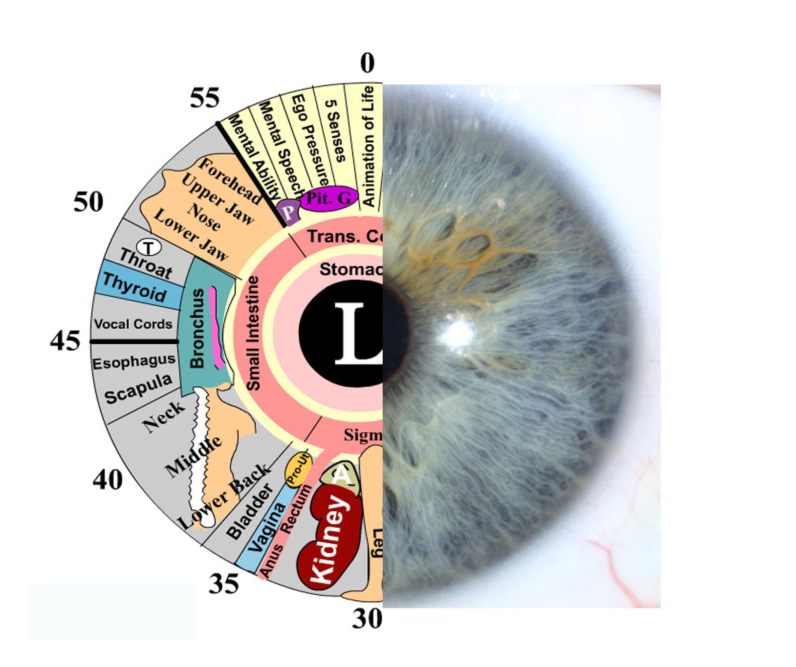 iridology-eye-and-chart-copy
